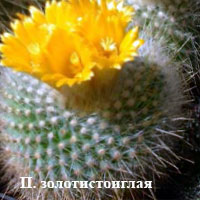 1175691379parodia_chr